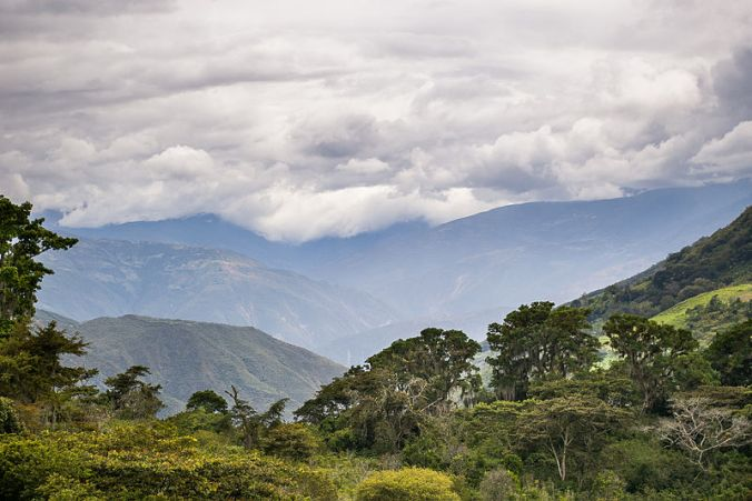 800px-View_from_the_coffee_farm