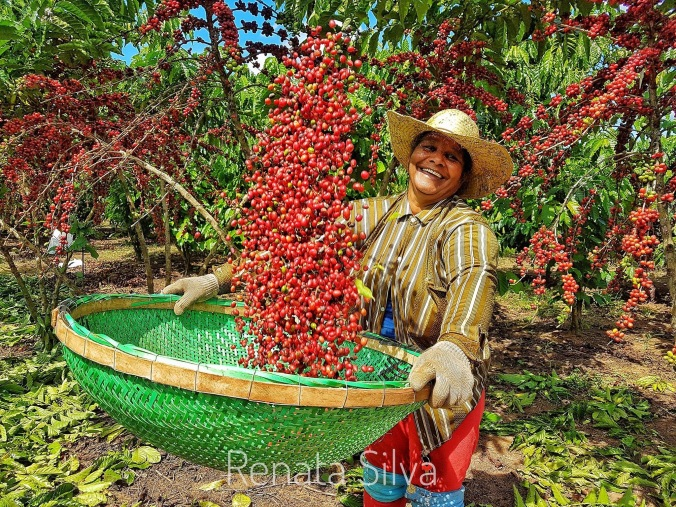 iwca-Brazil_Harvest