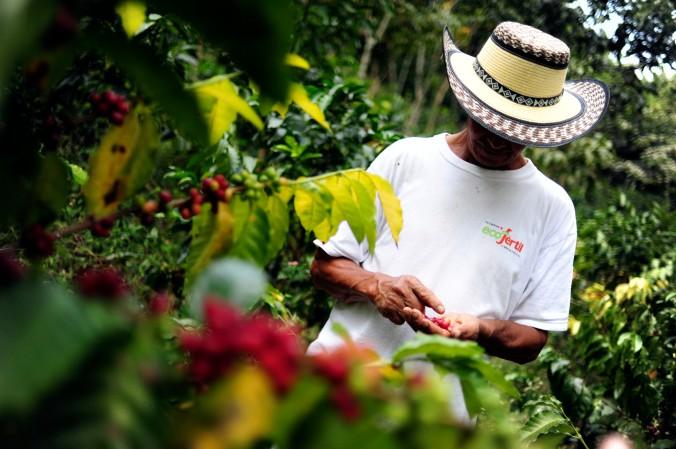NP_Coffee_Farmer3_(5867168901)