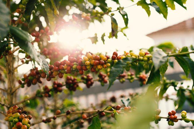 agriculture-berries-blur-1556665.jpg